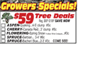$59 TREE DEALS..GOING ON NOW