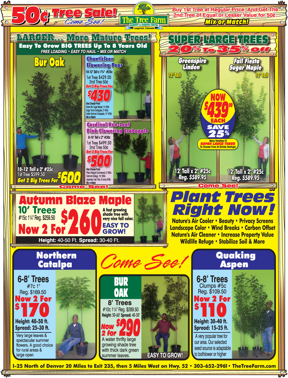 50¢ TREE SALE...GOING ON NOW!