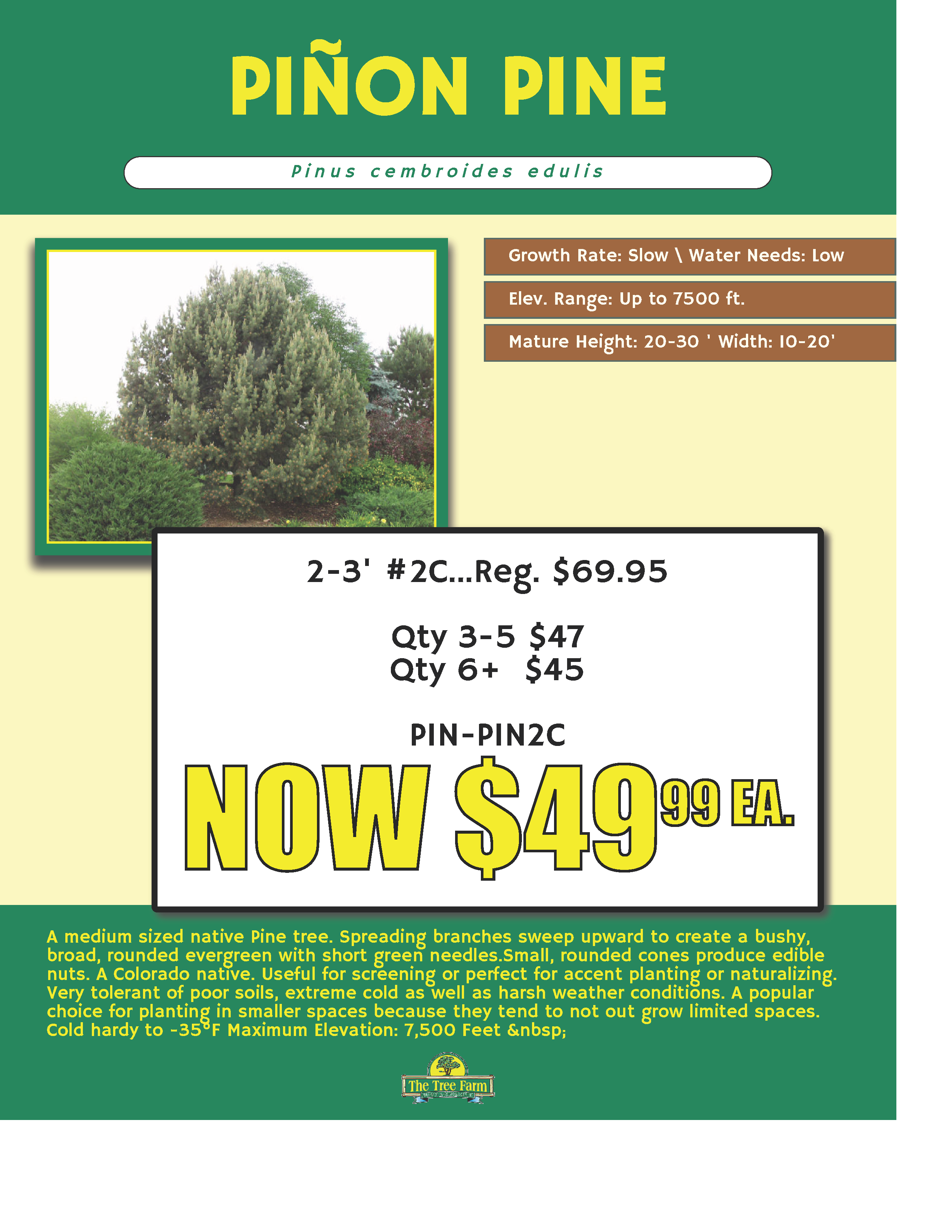PINON PINE ON SALE NOW
