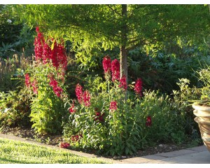 Compliment Red Cardinal Flower... ©photo ArborTanics Inc.