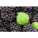 Blackberry - Generic