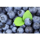 Blueberry-Generic