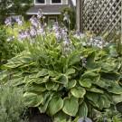 Photo Courtesy of Walter's Gardens, Inc.