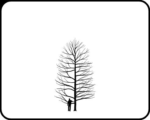 Bald cypress coloring pages ~ Baldcypress - TheTreeFarm.com