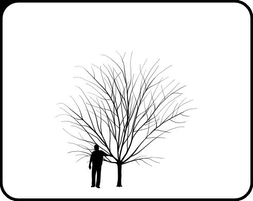Redbud tree coloring pages ~ Redbud, Eastern - TheTreeFarm.com