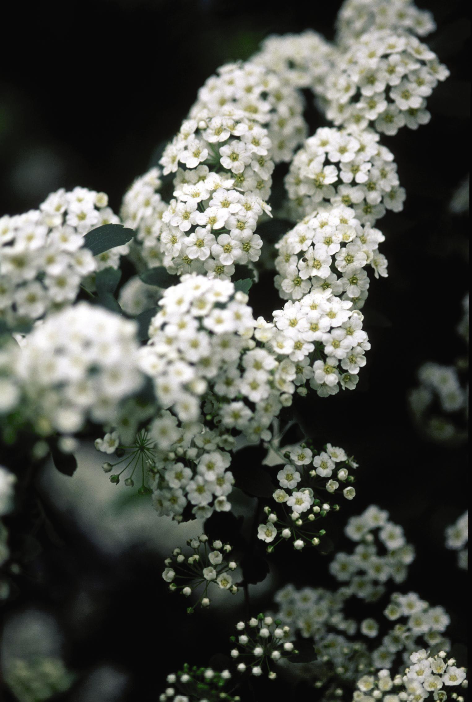 White Fall Wreath