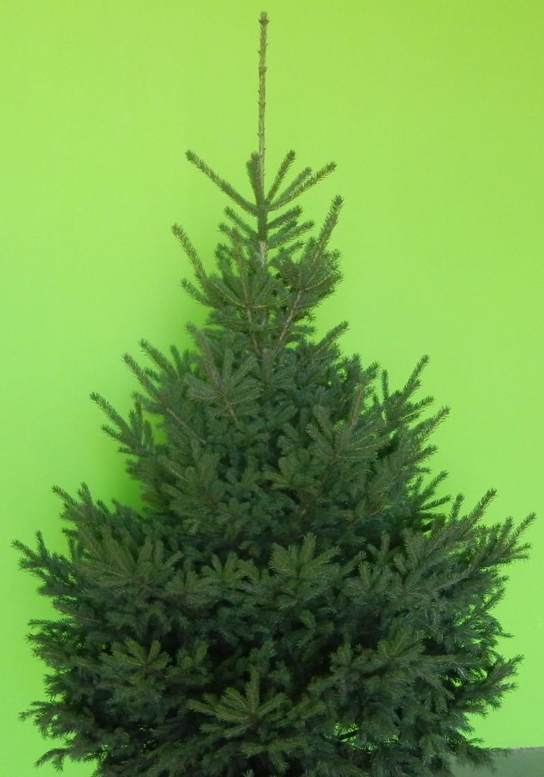 8 Ft Christmas Tree