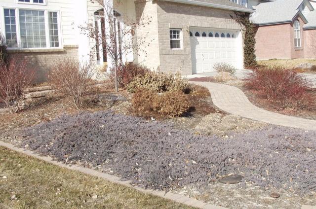 Juniper Wilton Carpet Blue Rug Juniper Thetreefarm Com